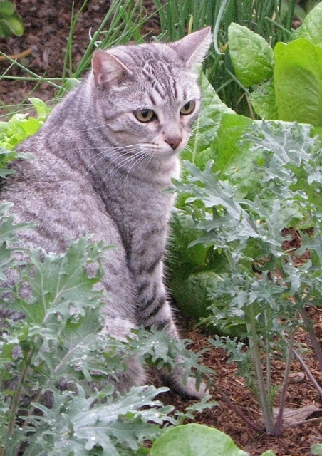 My cat Giggles loved the garden.  RIP Giggles.