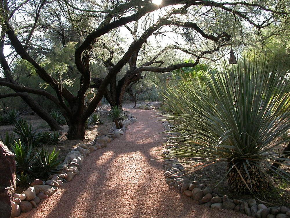 Mesquite pathway - Dillon garden