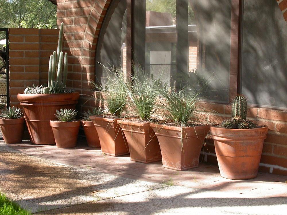 Container succulent planting