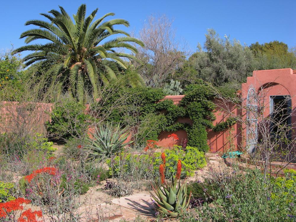 Cottage garden of desert plants