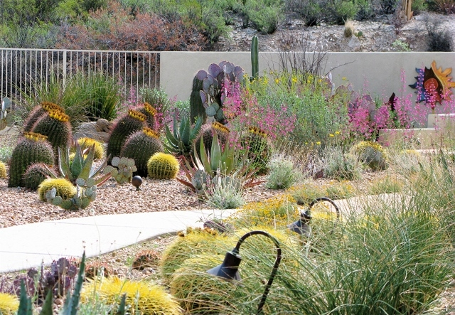 Milton succulent garden