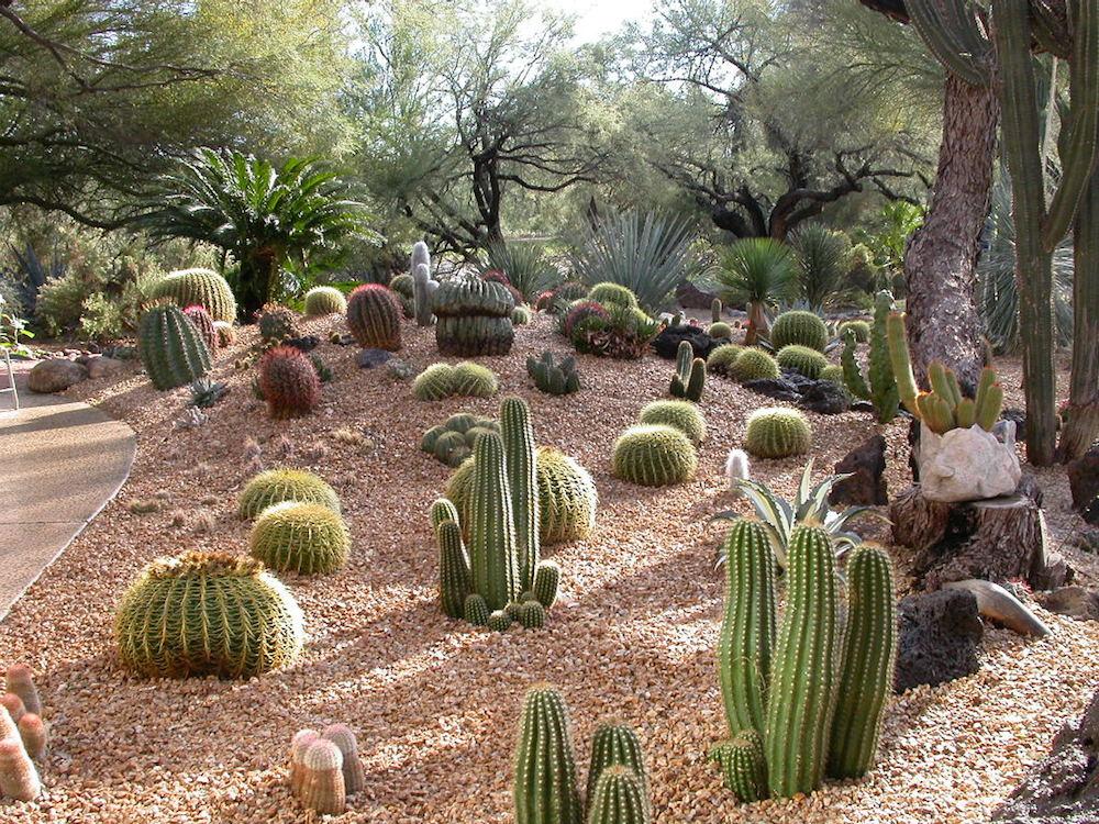Dillon succulent garden